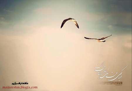 ثامن تم : تا ما دور هستیم ؛ ظهور نزدیک نیست ...